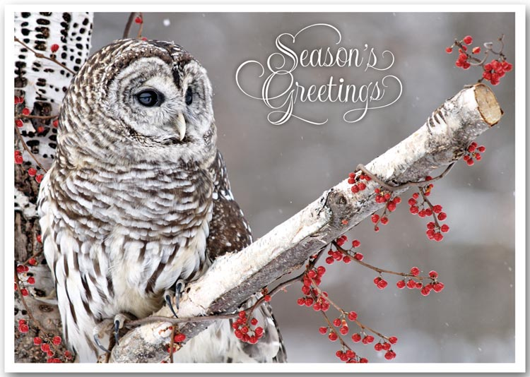 Holiday Greeting Cards with an Owl