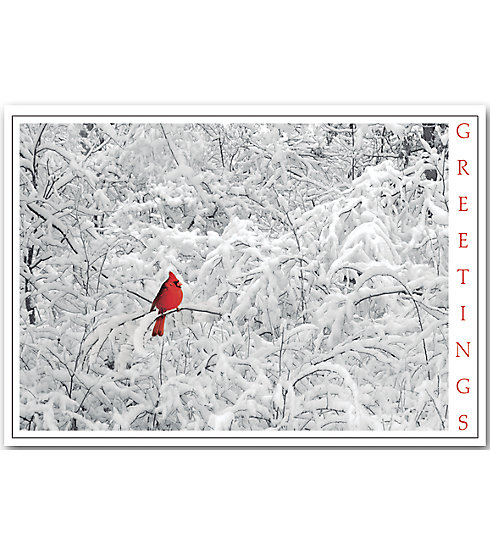 A beautiful outstanding red cardinal makes this budget card special and affordable.